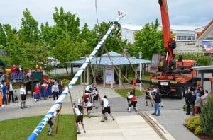 Die Aufstellung des Maibaums brachte nicht nur die Mitarbeiter der Firma Haas ins Schwitzen. Foto: BDF/Haas Fertigbau