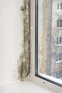 Wer zu wenig heizt und lüftet, kann Probleme mit der Schimmelbildung bekommen. Foto: djd/thx/Interessenverband Mieterschutz e.V.
