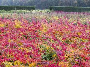Foto: BdB. - Baumschulen haben jetzt im Herbst das größte Angebot.