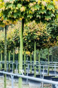 Foto: BdB. - Bäume und andere Gehölze lassen sich zu dieser Jahreszeit am besten verpflanzen.