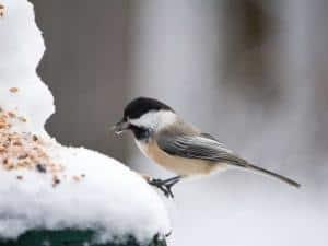 Foto: GPP/Welzhofer. - Auch wenn Experten heute raten, Gartenvögel das ganze Jahr über zu füttern, so sind es doch vor allem die Wintermonate, in denen die Menschen ihre Vogelhäuschen füllen.