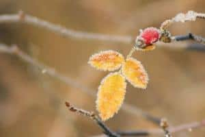 Foto: BdB. - Warme Tage - kalte Nächte. Steigende Temperaturschwankungen machen es den Pflanzen schwer, zur richtigen Zeit auszutreiben.