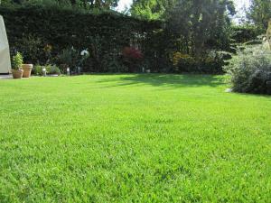 Blick in den Garten. Grüner Rasen. Foto: gartenhaus-test.de / pixelio.de