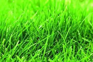 txn-p. Kaum ein Rasen schafft es, sich ohne Unterstützung dauerhaft gegen Unkraut und Moos durchzusetzen. Wird der Boden jedoch mit den richtigen Nährstoffen versorgt, rückt der Traumrasen schnell in greifbare Nähe. Fotos: Neudorff/txn-p
