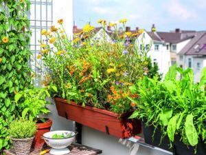 txn-p. Eine Auswahl frischer Kräuter direkt vom Balkon sieht schön aus und bringt Pep in die Küche. Foto: Neudorff/txn-p