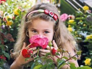 Die Rose gilt als die beliebteste und am häufigsten kultivierte Gartenblume der Welt. Foto: djd/www.rosen-tantau.com