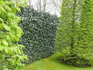 """Foto: Helix. - Die """"Hecke am laufenden Meter"""" gibt es als fertige Module in einer Höhe von bis zu 2,20 Meter. Sie ist grün und lebendig und fügt sich in die umgebende Natur ein."""