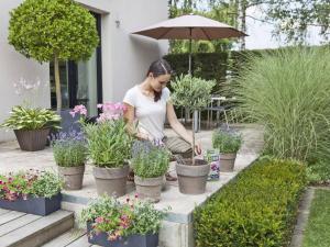 Kübelpflanzen auf Balkon und Terrasse leben in einem begrenzten Erdreich und benötigen deshalb regelmäßig Dünger, um den Nährstoffbedarf der Pflanzen zu decken. Foto: djd/Compo