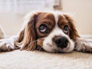 Gerüche von Haustieren in Wohnräumen bekämpfen